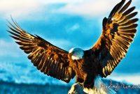 Gambar Burung Garuda